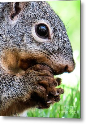 Squirrel 3 Metal Print