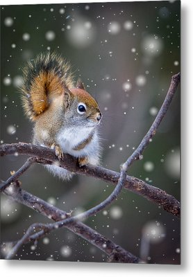Squirrel Balancing Act Metal Print by Patti Deters