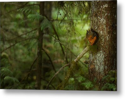 Metal Print featuring the photograph Squirrel Breaks The Silence by Lisa Knechtel