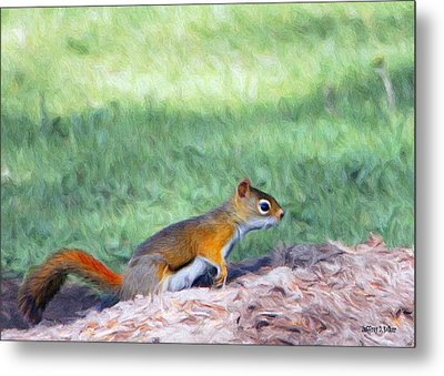 Squirrel In The Park Metal Print by Jeff Kolker