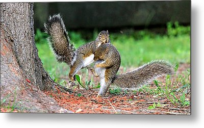 Squirrel Kung-fu  Metal Print by Celestial  Blue