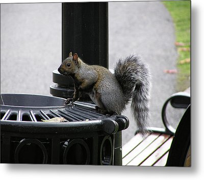 Squirrel On Garbage Can Metal Print by Richard Mitchell