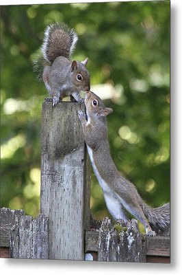 Squirrelly Affection Metal Print