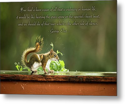 Squirrel's Heart Beat-george Eliot Metal Print by Onyonet  Photo Studios