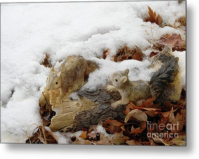 Squirrels In Winter Metal Print by Bill Hyde