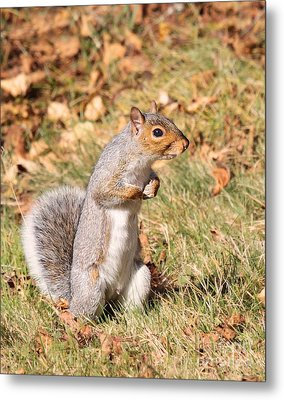 Metal Print featuring the photograph Squirrely Me by Debbie Stahre