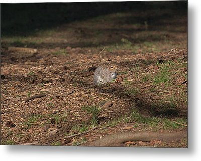 Squirrrrrrel? Metal Print