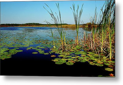 St. Mark's Lake Metal Print