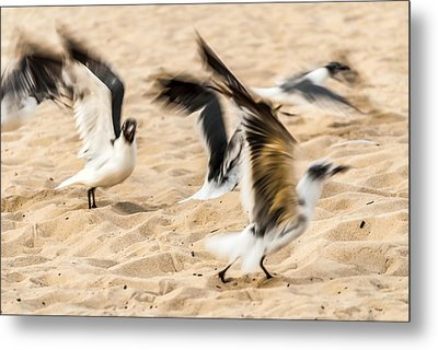 Stages Of Flight Metal Print