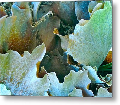 Staghorn Forest Metal Print by Gwyn Newcombe