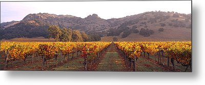 Stags Leap Wine Cellars Napa Metal Print by Panoramic Images