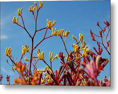 Stalks Of Color Metal Print by Jean Booth