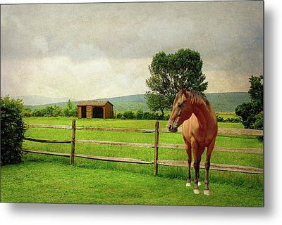 Metal Print featuring the photograph Stallion At Fence by Diana Angstadt