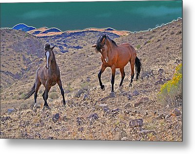 Stand Off Metal Print by Lula Adams