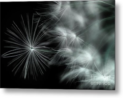 Stand Out And Be Noticed Metal Print by Michael Eingle