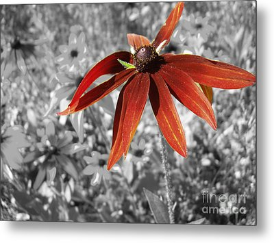 Stand Out  Metal Print by Cathy  Beharriell