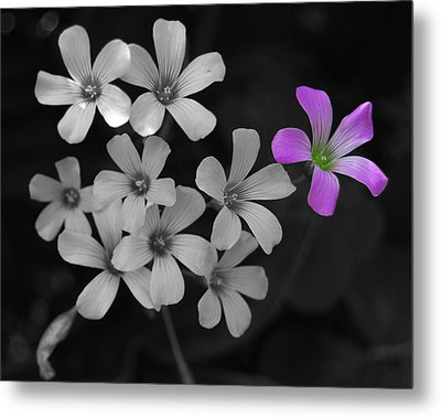 Metal Print featuring the photograph Stand Up Stand Out by Maggy Marsh