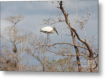 Standing On A Twig Metal Print by Christiane Schulze Art And Photography