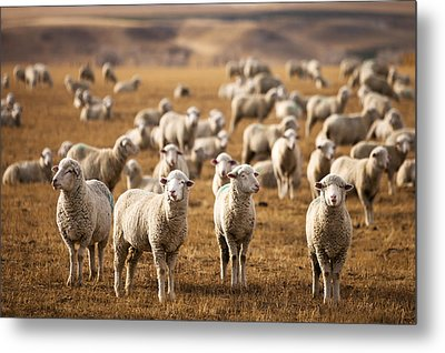 Standing Out In The Herd Metal Print by Todd Klassy