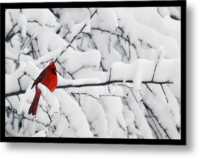 Metal Print featuring the photograph Standing Out by Shari Jardina