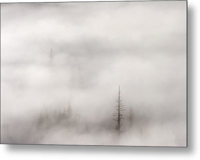 Standing Tall Metal Print by Mike  Dawson