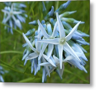 Star-spangled Flowers Metal Print