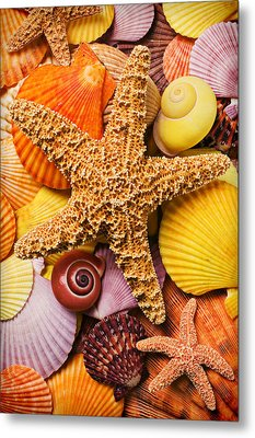 Starfish And Seashells  Metal Print by Garry Gay