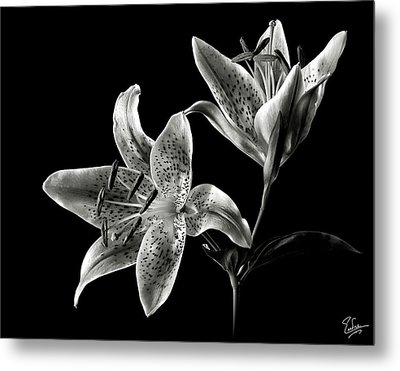 Stargazer Lily In Black And White Metal Print by Endre Balogh