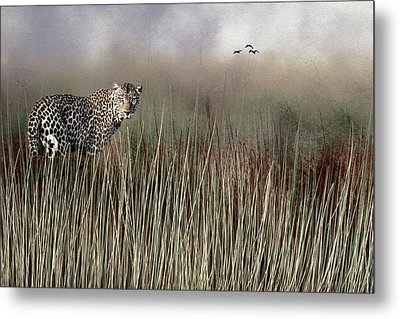 Metal Print featuring the photograph Staring Back by Diane Schuster