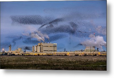 Starling Mumuration Metal Print by Ian Hufton
