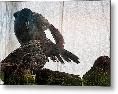 Starlings And The Grackle Metal Print by Ericamaxine Price