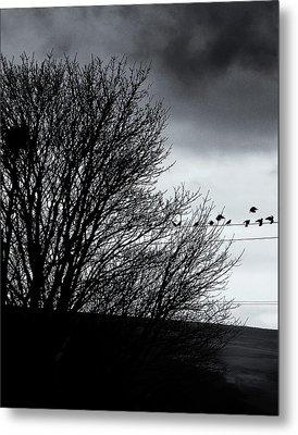 Starlings Roost Metal Print by Philip Openshaw