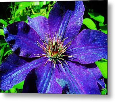 Metal Print featuring the photograph Starry Bloom by Susan Carella