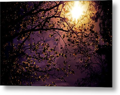 Stars In An Earthly Sky Metal Print by Vivienne Gucwa