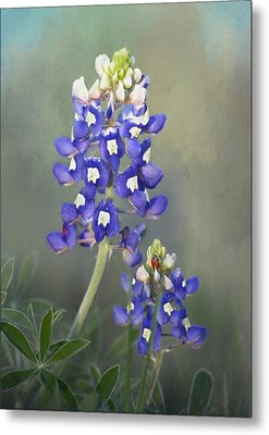 Metal Print featuring the photograph State Flower Of Texas by David and Carol Kelly