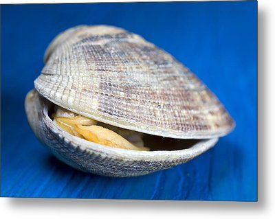 Steamed Clam Metal Print by Frank Tschakert