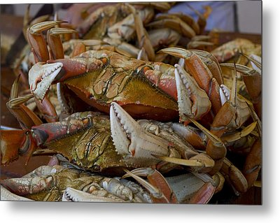 Steamed Crab Metal Print