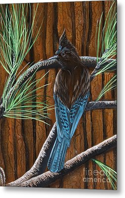 Stellar Jay Metal Print by Jennifer Lake