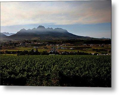 Stellenbosch Vineyard Metal Print by Dale Halbur