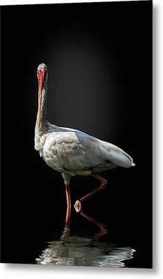 Stepping Out Metal Print by Cyndy Doty