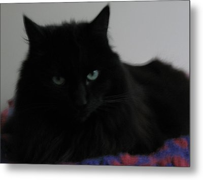 Stern Look Metal Print by AJ Brown