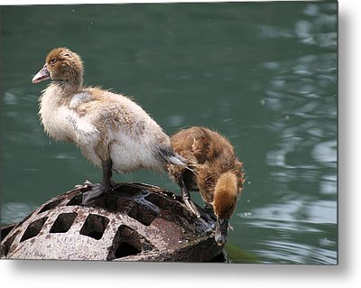 Sticking Together Metal Print
