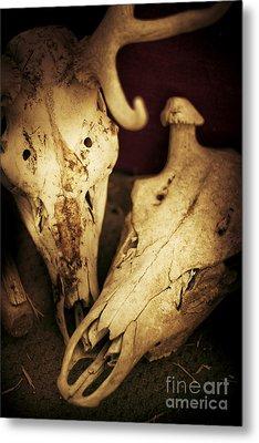 Still Death Metal Print by Jorgo Photography - Wall Art Gallery