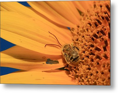 Metal Print featuring the photograph Still Sleeping by Chris Berry