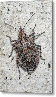 Metal Print featuring the photograph Stink Bug by Breck Bartholomew