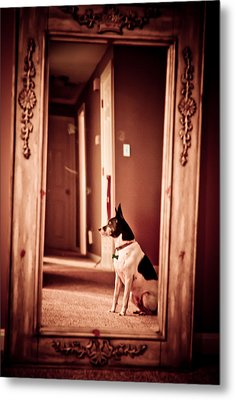 Stoic Metal Print by Andrew Kubica
