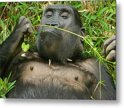 Stop And Smell The Grass Metal Print