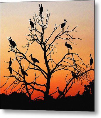 Storks In The Evening Sun Light Metal Print