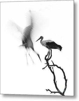 Storks Metal Print by Nahum Budin