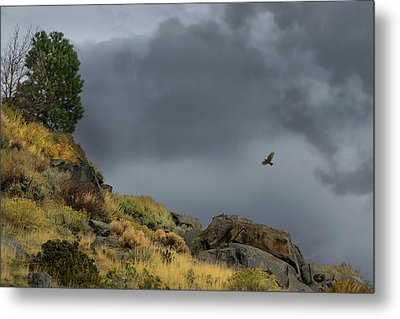 Metal Print featuring the photograph Stormy Flight by Frank Wilson